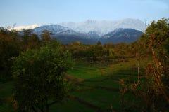 Neue Schneefälle und grüne Felder von Kangra Indien Stockfotografie
