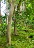Neue Stämme im grünen Wald Stockfotos