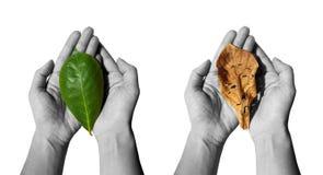 Neue und alte Blätter Stockfoto