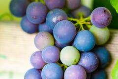Neue und reife Bündel der roten Weinreben, die im Garten wachsen clo Lizenzfreies Stockbild