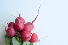 Neue und schöne rosa Kreise des Rettichs - stockfotografie