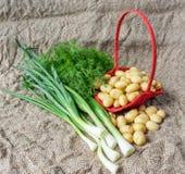 Neue Vorderansicht des Dills, der Frühlingszwiebeln und der Kartoffeln Stockbild