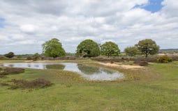 Neue Waldlandschaft mit Bäumen und Teich Stockfotos
