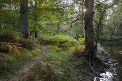 Neue Waldszene mit einem Fußweg durch den Fluss mit Sonne Stockbilder