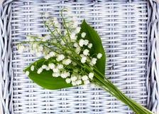 Neue weiße Maiglöckchenlüge auf einem Abtropfbrett Stockfotografie