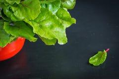 Neue Wurzeln der roten Rübe mit Blättern Stockbild