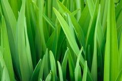 Neuer Abschluss des grünen Grases oben Stockfotografie