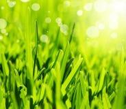 Neuer Auszugshintergrund des grünen Grases Stockfotografie