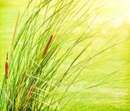 Neuer Auszugshintergrund des grünen Grases Stockfoto