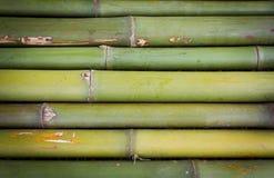 Neuer Bambushintergrund Lizenzfreie Stockbilder