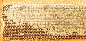 Neuer Bienenwabengoldfarbhintergrund Lizenzfreies Stockbild