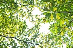 Neuer Blätter Hintergrund Lizenzfreies Stockbild