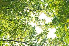 Neuer Blätter Hintergrund Lizenzfreie Stockbilder