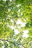 Neuer Blätter Hintergrund Lizenzfreie Stockfotos