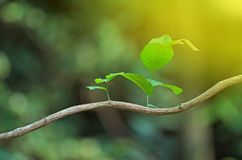 Neuer Blatt- und Sonnestrahl Stockfotos