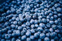Neuer Blaubeerehintergrund Beschaffenheitsblaubeerbeeren schließen oben lizenzfreie stockbilder