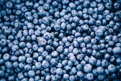 Neuer Blaubeerehintergrund Beschaffenheitsblaubeerbeeren schließen oben stockfotografie