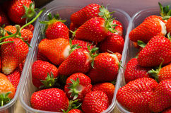 Neuer Erdbeere-Hintergrund Lizenzfreies Stockfoto