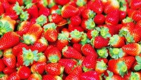 Neuer Erdbeerehintergrund Lizenzfreie Stockfotografie