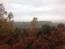 Neuer Forest Skyline Stockbilder