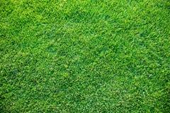 Neuer Frühling geen Gras Stockfotos