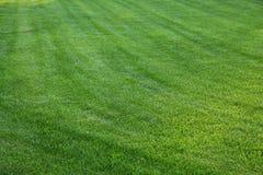 Neuer Frühling geen Gras Lizenzfreies Stockbild