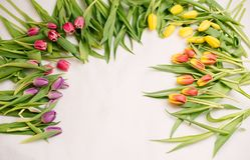 Neuer Frühling, Ostern-Blumen Stockbild