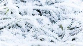 Neuer Frost bedeckt grünes Gras Lizenzfreie Stockfotografie