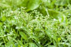Neuer grüner Frühlingssommerhintergrund mit Tropfen lizenzfreies stockfoto
