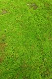 Neuer grüner Mooshintergrund Stockbilder
