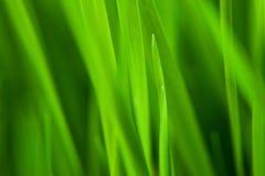 Neuer Hintergrund des grünen Grases Lizenzfreie Stockfotografie