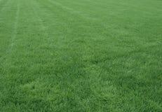 Neuer Hintergrund des grünen Grases Lizenzfreies Stockfoto