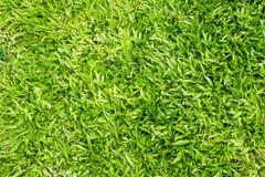 Neuer Hintergrund des grünen Grases Lizenzfreie Stockfotos