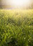 Neuer Hintergrund des grünen Grases Natürliche Grasbeschaffenheit Stockfoto