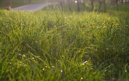 Neuer Hintergrund des grünen Grases Natürliche Grasbeschaffenheit Lizenzfreies Stockfoto