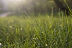 Neuer Hintergrund des grünen Grases Natürliche Grasbeschaffenheit Lizenzfreies Stockbild