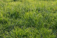 Neuer Hintergrund des grünen Grases Natürliche Grasbeschaffenheit Stockbilder