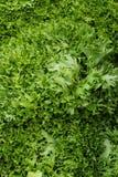 Neuer Kopfsalatmarkt Stockbilder