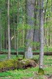 Neuer Mischhochsitz in der Frühjahrsonne Stockbild