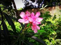 Neuer Morgen der Blumen stockfotografie