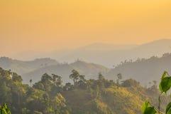Neuer Morgen im Wald lizenzfreie stockbilder