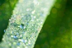 Neuer Natur-Hintergrund mit Gras- und Wassertropfen lizenzfreie stockfotografie