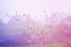 Neuer Naturhintergrund des Weichzeichnungsgrasblumenfrühlinges Stockbild