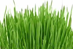 Neuer neuer Hintergrund des grünen Grases Stockfoto