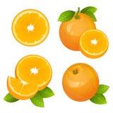 Neuer orange Fruchtscheibensatz Sammlung realistische Zitrusfruchtvektorillustrationen Saftige Orange mit Blättern Lizenzfreies Stockbild