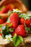 Neuer organischer Erdbeerhintergrund Lizenzfreie Stockfotos