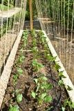 Neuer organischer Garten Stockbilder