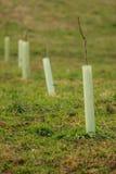 Neuer Pflanzenschutz Stockfotografie