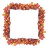 Neuer Rahmen der roten Trauben mit Wassertropfen Lizenzfreie Stockfotografie
