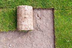 Neuer Rasen Stockfotografie